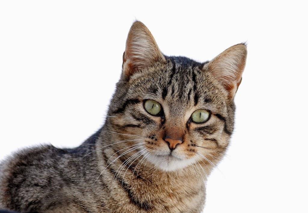 Gatos y areneros. Excusados felinos