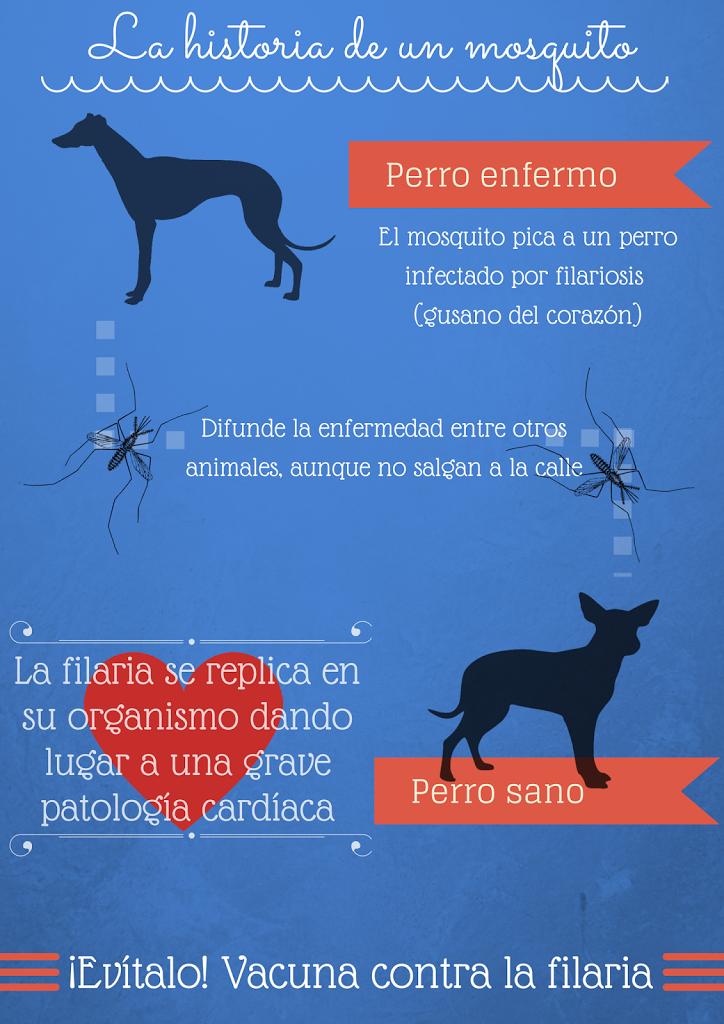 Filariosis en mascotas