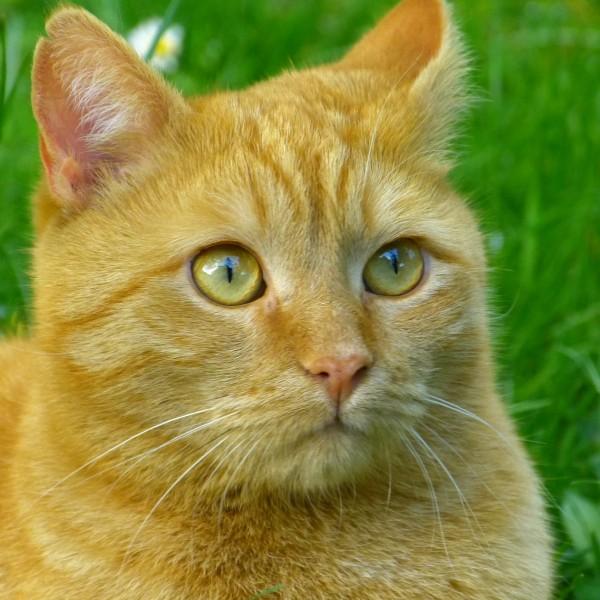 gato con vómitos y diarrea