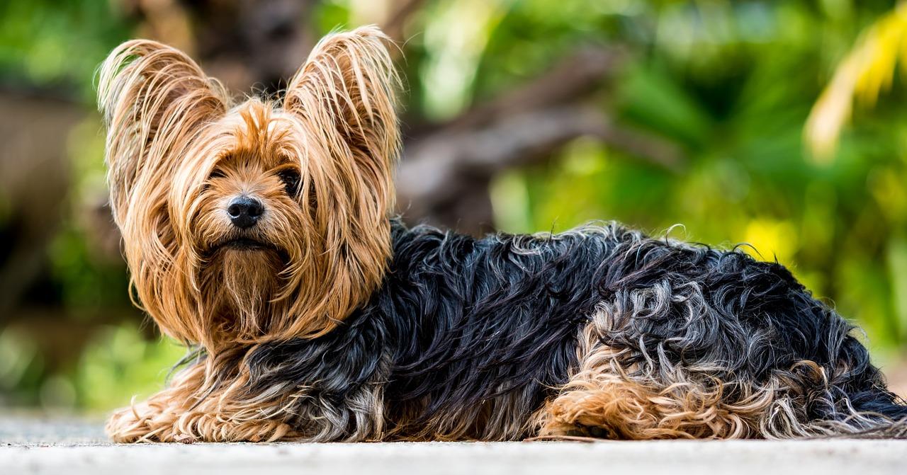 perro-hernia-dicas-problema-de-espalda