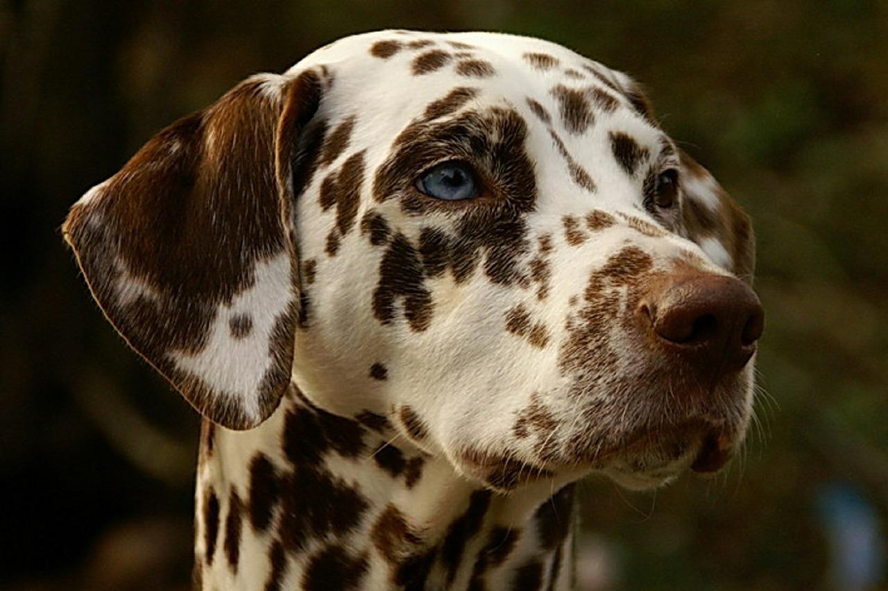 perro-hernia-disco-espalda