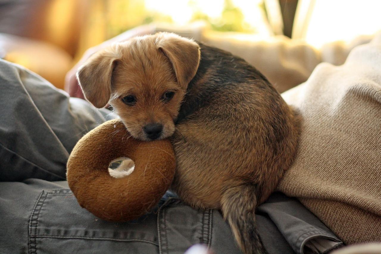 perro-pippy-cachorro