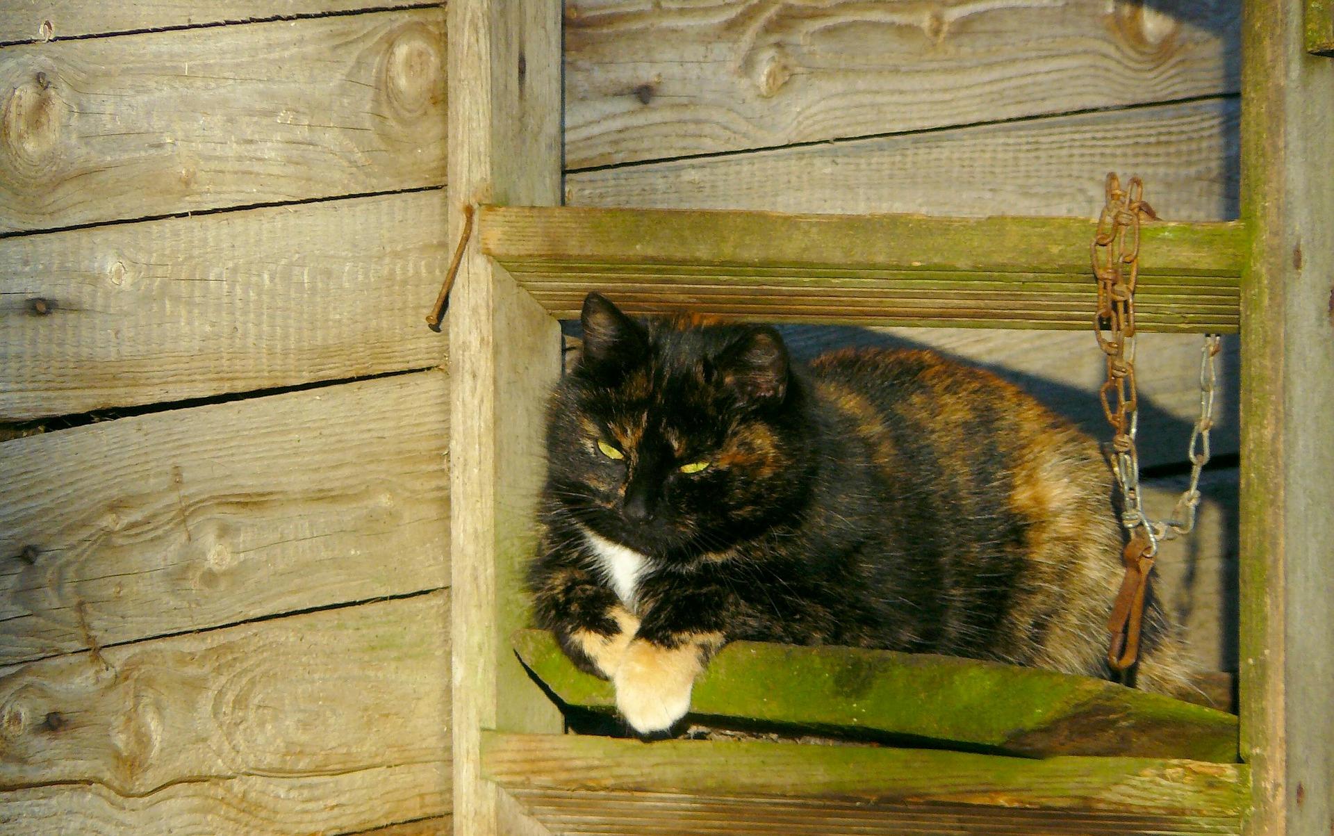 los gatos mayores suelen padecer hipertiroidismo
