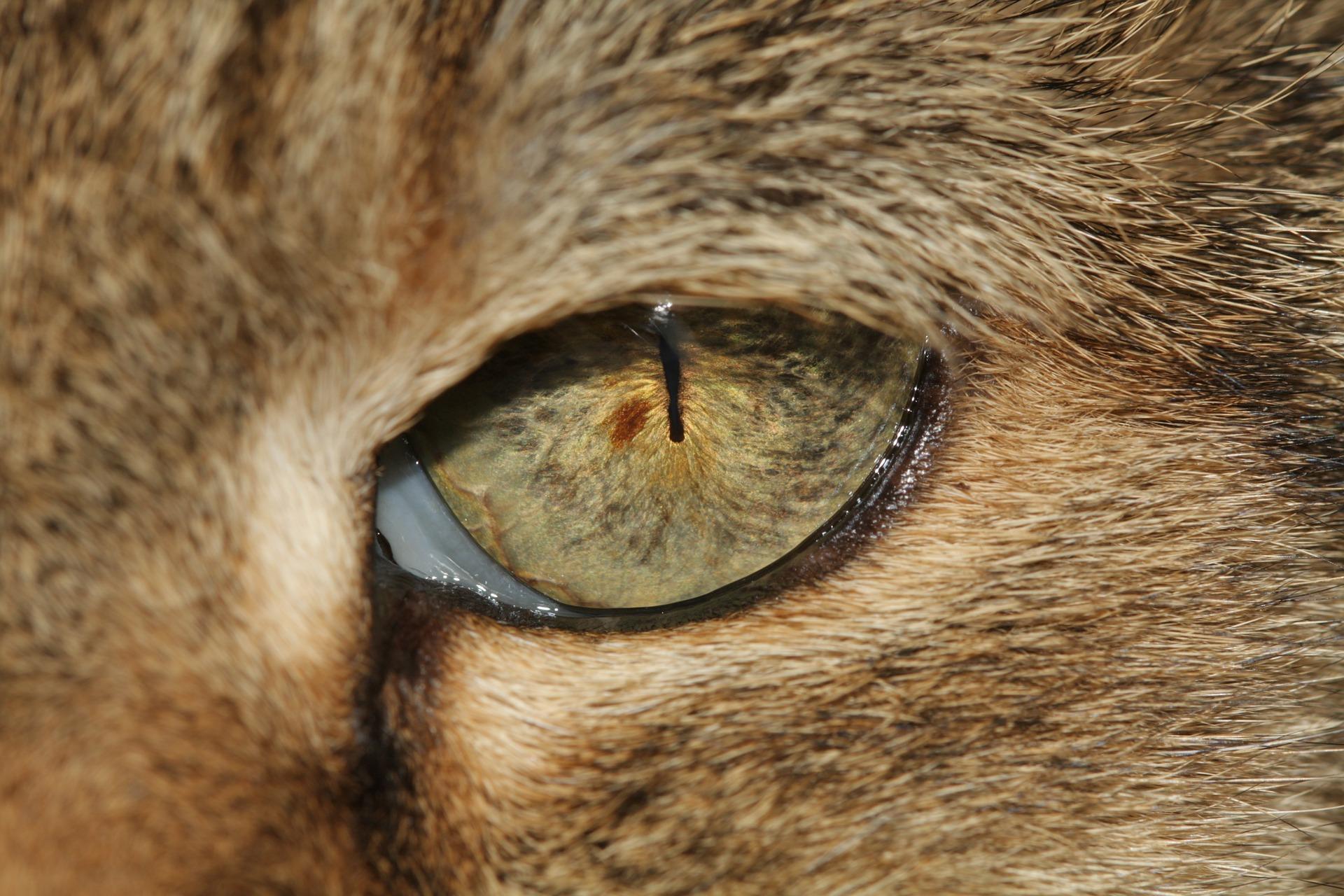 gato-ojo-probelmas_oculares