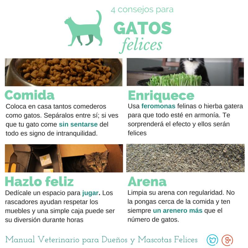 4 consejos para gatos felices