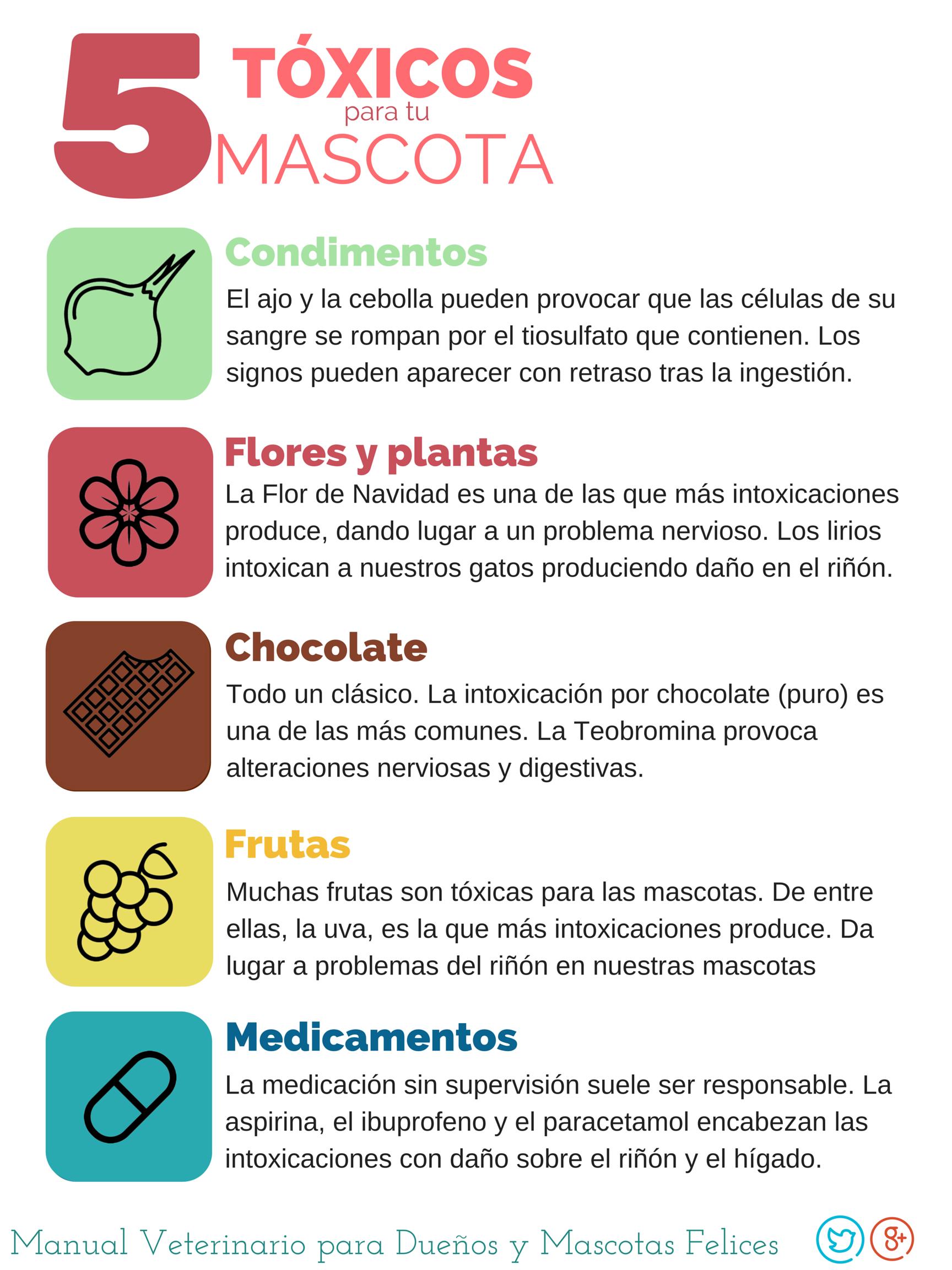 Los cinco tóxicos para tu mascota: Condimentos (cebolla y ajo), Flores y plantas (la Flor de Navidad y los Lirios), el Chocolate, las Frutas (las uvas) y los Medicamentos (Ibuprofeno, aspirina, y paracetamol)
