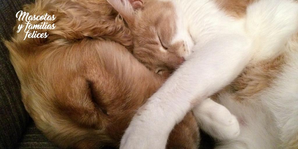 Perro convive con gato