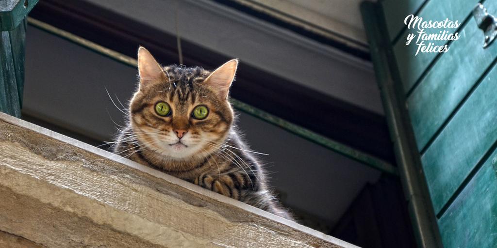 El indrome del gato paracaidista