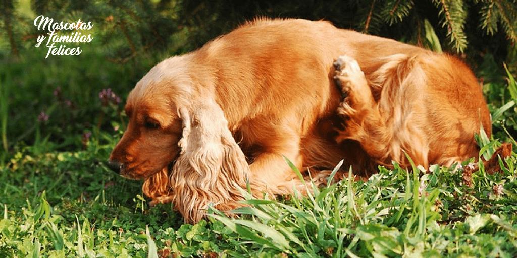 perro rascado por alergia